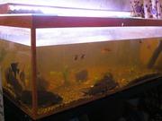 аквариум 380 литров
