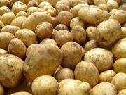 картофель от 70 руб