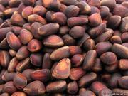 Продам орех 500 руб. 10-ти литровое ведро,  доставка