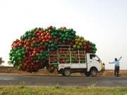 Услуги грузового бортового  автомобиля 6 тонн (все борта открываются):