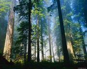 Продается качественный лес на корню