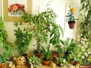 Ландшафтный дизайн,  озеленение,  растениеводство
