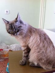 найдена кошка найдена кошка