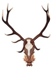 Куплю рога оленя и лося оптом в Томской области.